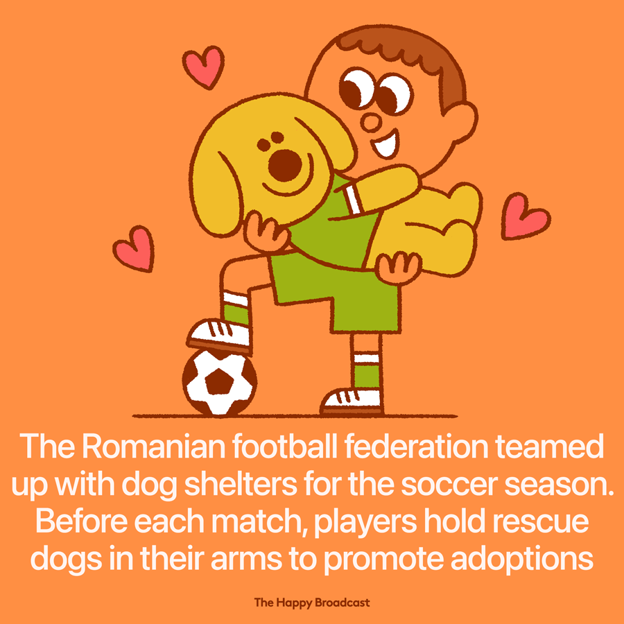 Soccer players in Romania help adopting stray dogs