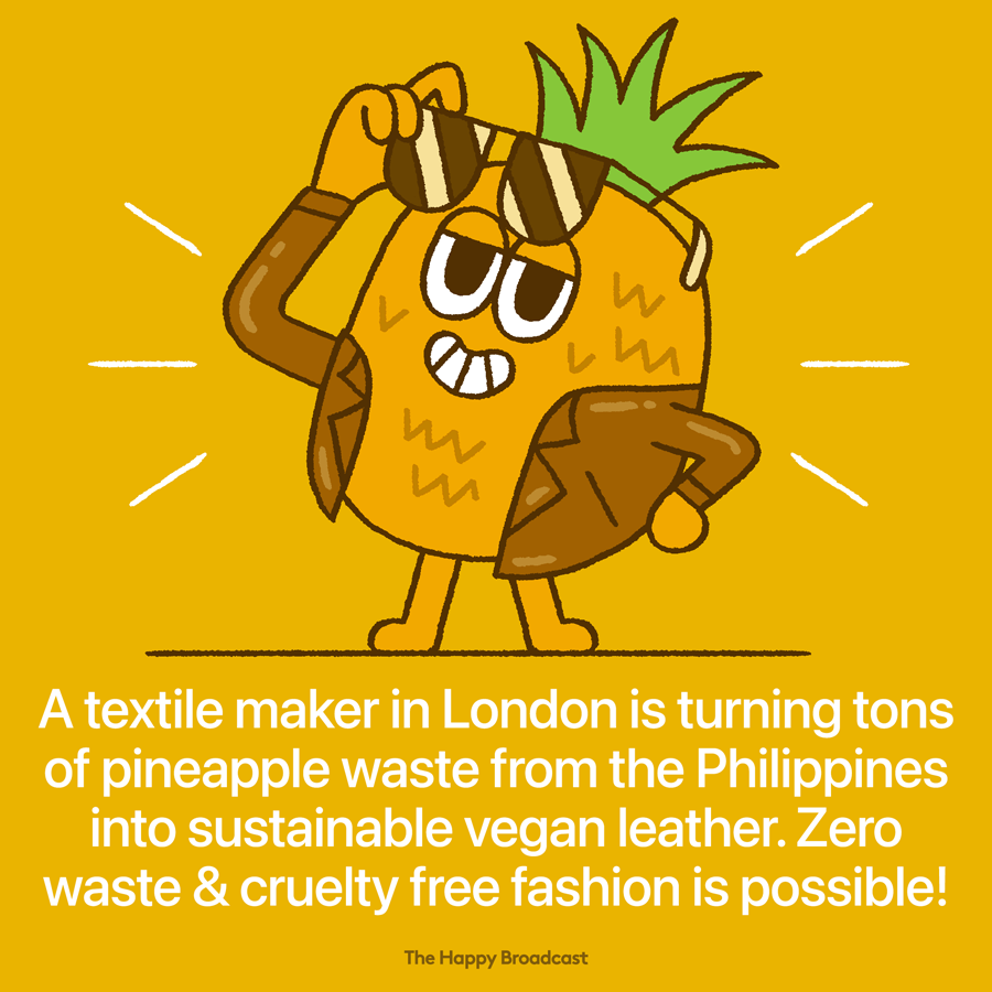 Vegan leather upcycled from pineapple waste