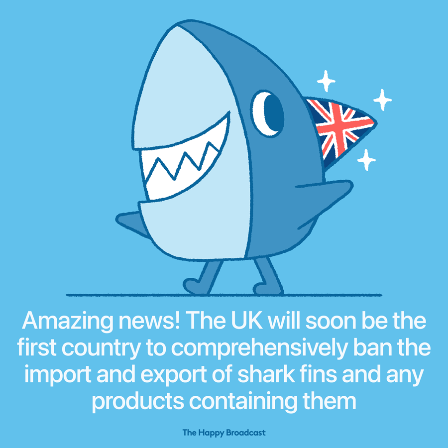 UK bans shark fin trade